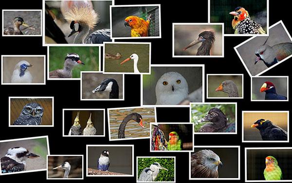 Eine Collage des Vogelparks